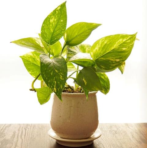 記事内 出窓 窓辺の植物W480